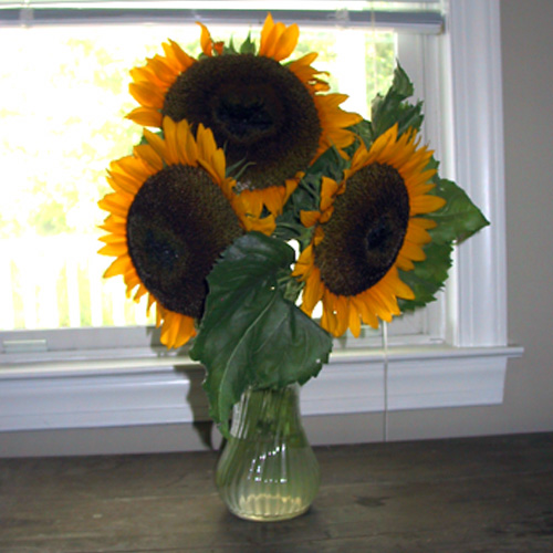 Windowsunflowers072006